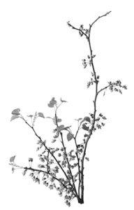 Leaf Branch 9