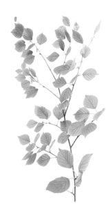 Leaf Branch 8