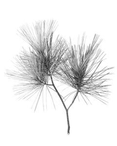 Leaf Branch 4