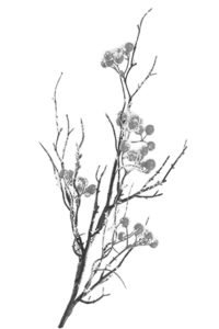 Leaf Branch 2