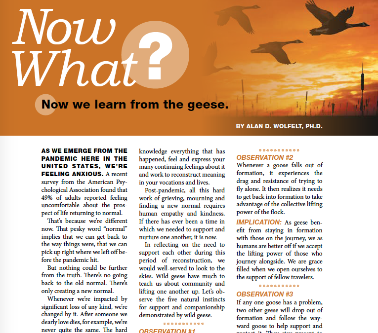 The Director: Now What? Now We Learn from the Geese